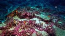 GÖBEKLİTEPE - Antalya'da 3 Bin 600 Yıllık Gemi Batığı Bulundu