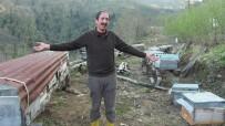 Artvin'in Borçka İlçesinde Ayı Saldırıları Köylüleri Canından Bezdirdi
