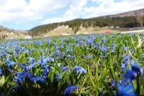 Mor Yayla'nın Mavi Yıldız Çiçekleri Kendini Göstermeye Başladı