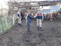 Artvin'de Köylünün Kaybolan Hayvanlarını Jandarma Buldu