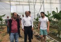 AHMET DURSUN - Bafra İle Antalya 'Tarım' Kardeşi Oldu