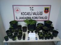 Fidancılık İşletmesine Uyuşturucu Operasyonu Açıklaması 6 Gözaltı