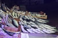 BALIK FİYATLARI - (Özel) Tezgahta Kilosu 10 Liraya Balık Var Alan Yok