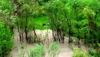 (Özel) Zap Suyu'nda Su Samuru Görüntülendi