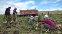 Sıcakta Çalışan Tarım İşçilerinin Ekmek Mücadelesi