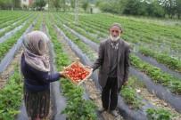 Sason'da Yılın İlk Çilek Hasadı Başladı