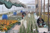 (Özel) Bu Köyün Annelerinin Yetiştirdiği Çiçek Tohumları Para Basıyor, Dünyaya İhraç Oluyor