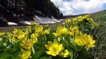 Sarıkamış'ta Mayıs Ayında Kış İle Bahar Bir Arada