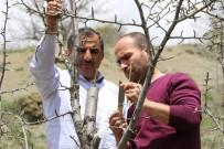 Gümüşhane'de Yaban Hayatı İçin Meyve Fidanı Aşılanıyor