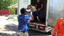 Kamyonetin Çarptığı Köpek Tedaviye Alındı