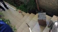 Nusaybin'de Evin Bahçesine Giren Yılanı İtfaiye Ekipleri Yakaladı