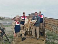 Susuz'da Çaldıkları Hayvanları Arpaçay'da Sattılar