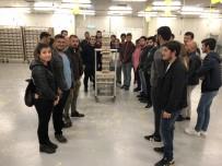 AYDOĞAN - Kumluca MYO Öğrencileri Bombus Arısı Üretimini Yerinde İnceledi