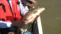 Ağlardan Kurtarılan Balıklar, Suya Bırakıldı