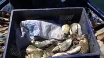 AVCILIK - Çıldırlı Balıkçıların Ümidi Gelecek Sezona Kaldı