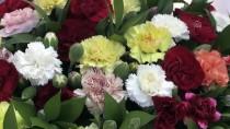Türkiye'nin İlk Tescilli Karanfili Dünya Pazarına Sunuluyor