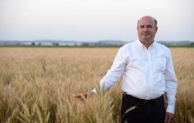 İncefikir Açıklaması 'Buğday Ekim Alanı Arttırılmalı'