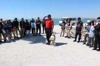 OLAY YERİ İNCELEME - Jandarma Teşkilatının Gözbebeği Eğitimli Köpekler Hayran Bıraktı