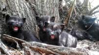 MAHSUR KALDI - Yavru Kediler Söğüt Ağacında Mahsur Kaldı