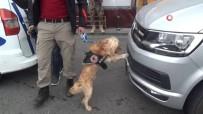 POLİS HELİKOPTERİ - Narkotik Köpeği 'Kuki' Vatandaşların İlgi Odağı Oldu