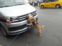 POLİS HELİKOPTERİ - Özel Eğitimli Narkotik Köpeği 'Kuki' Vatandaşların İlgi Odağı Oldu