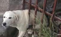 Demir Korkuluklara Sıkışan Köpeği İtfaiye Ekipleri Kurtardı