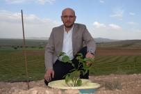 AVRUPALı - Sulamasız Tarıma İmkan Veren Ürün Geliştirdiler