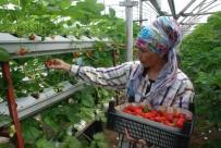 Üniversiteli Genç Çiftçiligi Tercih Etti