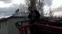 MAHSUR KALDI - Ağaçta Mahsur Kalan Kediyi İtfaiye Ekibi Kurtardı