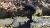 ANTAKYA - Amik Ovası'nda Kurtarılan Balıklar Göle Taşındı