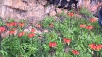 Hakkari'de Çiçek Vadisi'ne Doğa Yürüyüşü