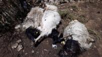 Hakkari'de Yıldırım Düştü Açıklaması 13 Hayvan Telef Oldu