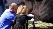 Anaokulu Öğrencileri Süt Sağmayı Öğrendi