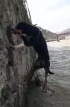 Dereye Düşen Köpeği Böyle Kurtardılar