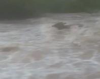 Hayvanlar Suya Kapıldı Açıklaması Dehşet Anları Kamerada