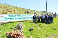 Heykel Dağı Eteklerine Bin Fidan Dikildi