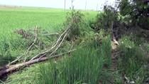 Afyonkarahisar'da Otomobil Tarlaya Devrildi Açıklaması 1 Ölü, 2 Yaralı