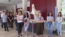 TEKIROVA - Antalya'da Öldürülen Arkeolog İçin Müze Önünde Tören
