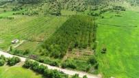 YAĞAN - Dolu Ve Sağanak Meyve Bahçelerini Vurdu, Verim Yüzde 90 Oranında Düştü