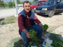 Hisarcık'ta Sebze Fidesi Satışları Arttı