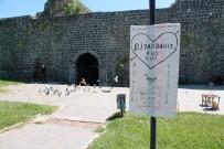 Tarihi Surların İçine Kuş Evi Yaptı
