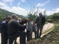 HALK EĞİTİM - Trabzon'da Çiftçilere Yönelik İlk Kez Meyve Ağaçlarını Budama Ve Aşılama Kursu Düzenleniyor