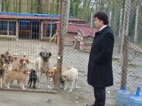 Türkeli'deki Hayvan Barınağında İyileştirme Çalışmaları
