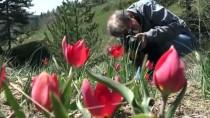 Lalelerden 'Şehitler Diyarı'nda Görsel Şölen