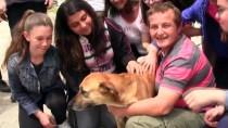 (Özel) Öğrenciler Kanserli Köpeği Tedavi Ettirdi
