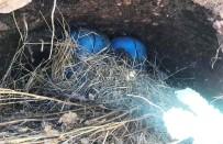 SURİYE - Suriye Sınırında 70 Kilo Patlayıcı Ele Geçirildi