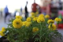 ESTETIK - Gürpınar Çiçek Açtı
