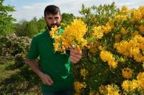 Karadeniz Yaylarında Güller Açtı