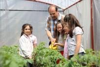 Kocaeli'de Okul Bahçesine Kurulan Seralar Minik Öğrencileri Toprakla Tanıştırıyor
