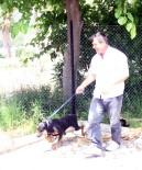 KEMER BELEDİYESİ - Sahipsiz Doberman Yavrusu Barınağa Teslim Edildi